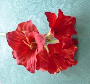 Amaryllis červený MH91963