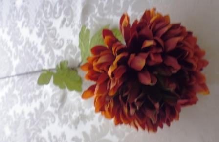 Chryzantéma okrová MH91831