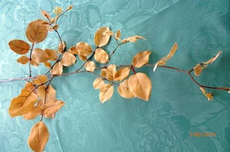 Listy růže - kávová MH91817