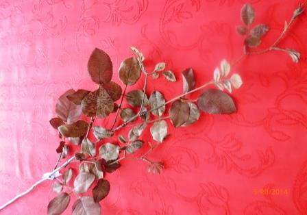 Listy růže - tmavě hnědá MH91817