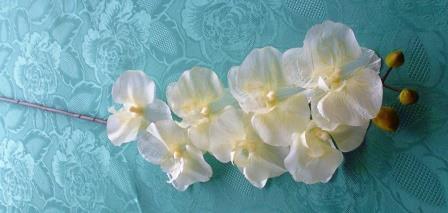 Phalaenopsis bílá malá MH91811