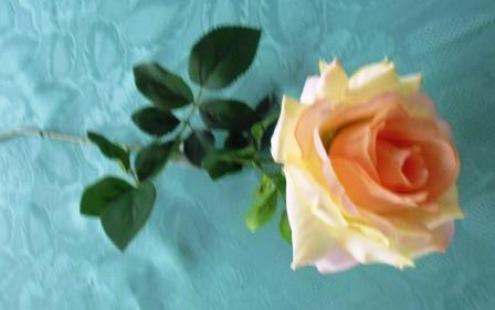 Růže čajová béžová oranžový střed MH91646