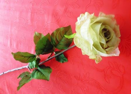 Růže poupě zelenkavá MH91814