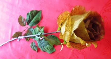 Růže poupě zlatá MH91814