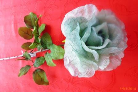 Růže rozkvetlá šedá MH91813