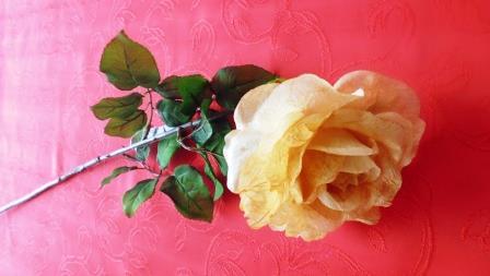 Růže rozkvetlá kávová MH91813