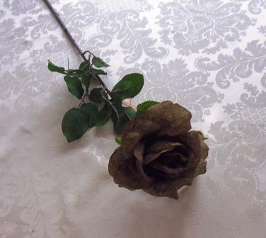 Růže rozkvetlá tmavě hnědá MH91913
