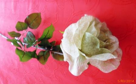 Růže rozkvetlá zelenkavá MH91813
