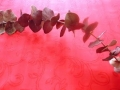 Eukalyptus - tmavě hnědá MH91816