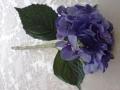 Hortenzie modrá delší MH91116