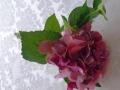Hortenzie růžová kratší  MH91915