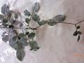 Listy růže - šedá MH91817