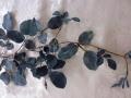 Listy růže - modrá MH91817