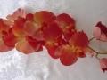 Phalaenopsis cihlová jednoduchá MH91655