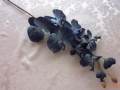 Phalaenopsis modrá jednoduchá MH91655