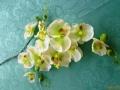 Phalaenopsis zelenobílá rozvětvená MH91515