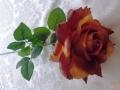 Růže čajová okrová MH91646