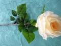 Růže poupě béžová MH91814