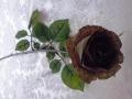 Růže poupě tmavě hnědá MH91814